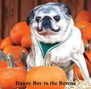 Danny Boy to the Rescue book about helping senior shelter dogs