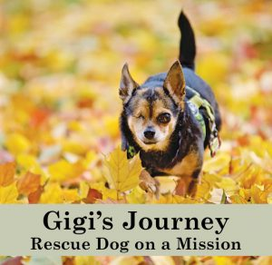 Gigi's Journey Rescue Dog on a Mission book about helping senior shelter dogs